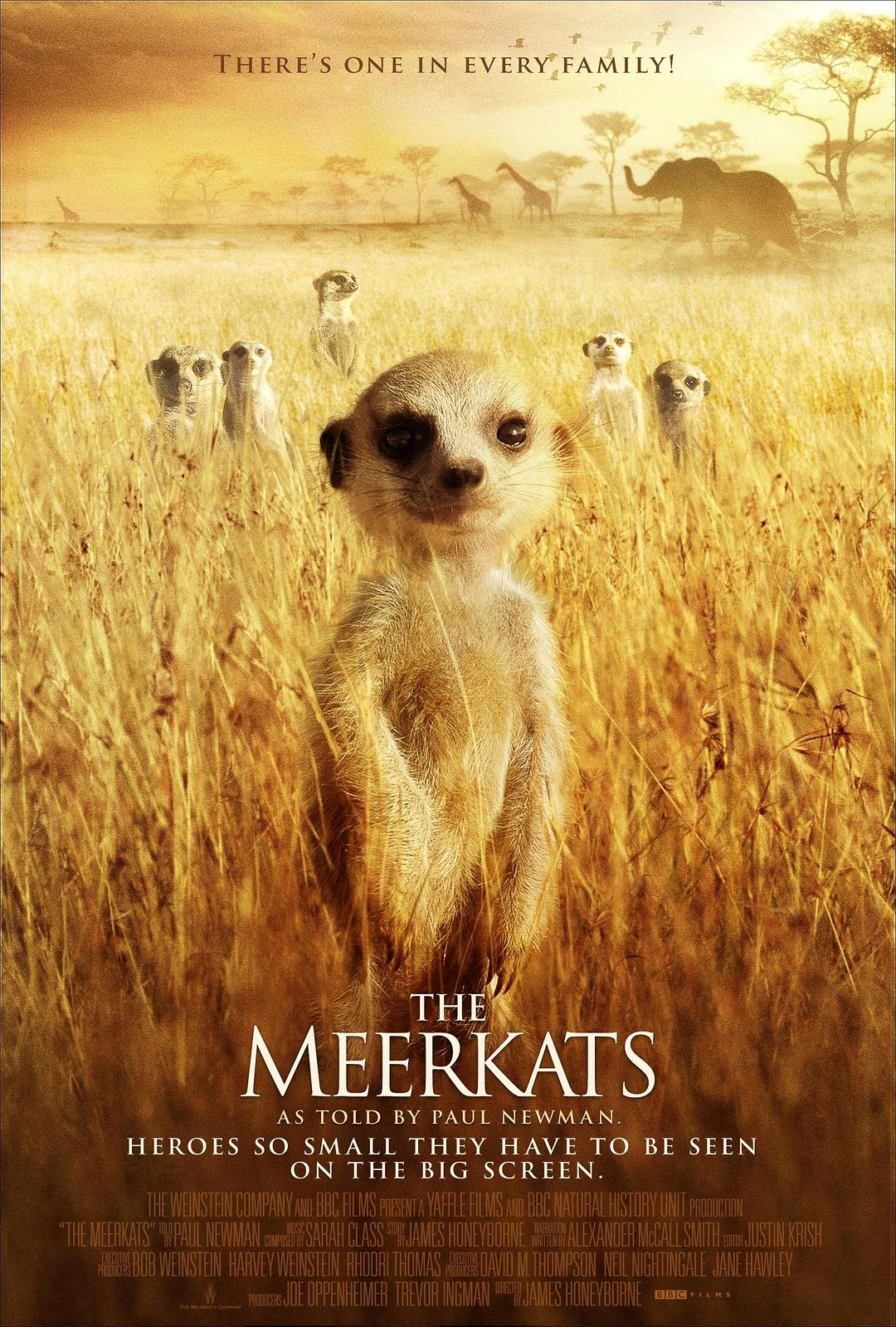 悠悠MP4_MP4电影下载_蒙哥/狐獴家庭 The.Meerkats.2008.1080p.BluRay.x264.DTS-FGT 7.56GB